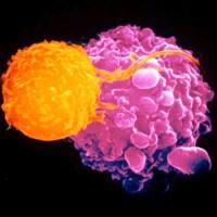 Γνωρίζετε τι είναι το ανοσοποιητικό σύστημα, τι ακριβώς κάνει και τι είναι η ανοσολογία; Απλοί τρόποι που βοηθούν στην ενίσχυση του