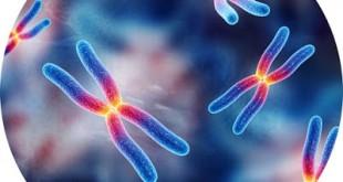 Τι σημαίνουν οι όροι ομόζυγος ή ομοζυγώτης και ετερόζυγος ή ετεροζυγώτης και πώς βοηθά να καταλάβουμε ορισμένες ασθένειες, αναιμίες, σπάνιες παθήσεις, καρκίνο
