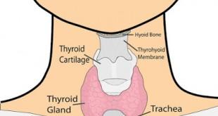 Τι είναι η καλσιτονίνη; Πόσο σημαντική εξέταση είναι στον προσδιορισμό καρκίνου στο θυρεοειδή και άλλων καρκίνων;