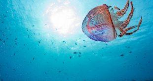 Τσίμπημα μέδουσας: Ο πιο απλός τρόπος να εξουδετερώσετε το δηλητήριο