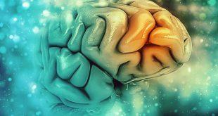 Συχνές ερωτήσεις για την άνοια και το Αλτσχάιμερ