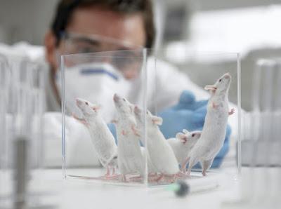 Απόφαση σταθμός του Ευρωπαϊκού Δικαστηρίου: Απαγορεύεται η πώληση καλλυντικών που δοκιμάστηκαν σε ζώα!