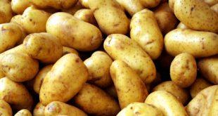 Απάτη, βαφτίζαν γαλλική πατάτα ως ελληνική