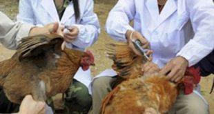 Γρίπη των πτηνών στoν Έβρο. Χιλιάδες πτηνά θανατώνονται στην Βουλγαρία