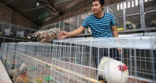 Σε συναγερμό ο ΠΟΥ για τη γρίπη των πτηνών