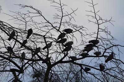 Τα πουλιά λειτουργούν ως αντικαταθλιπτικό και αγχολυτικό
