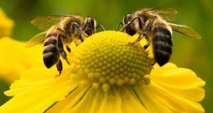 Χωρίς μέλισσες οι πιο σημαντικές φυτείες θα αφανιστούν. Το πρόγραμμα Bee Care της Bayer για την υγεία των μελισσών