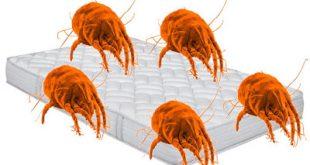 Ακάρεα βρίσκονται παντού στο σπίτι, στην σκόνη, στο στρώμα. Προκαλούν άσθμα, ρινίτιδα, καταρροή, φαγούρα, επιπεφυκίτιδα, αναπνευστικά προβλήματα