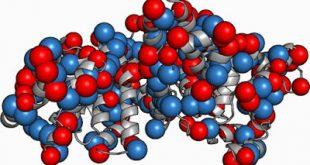 Τι είναι τα ολικά λευκώματα και τι η αλβουμίνη και οι σφαιρίνες; Σε ποιες παθολογικές καταστάσεις αυξάνουν και σε ποιες ελαττώνονται;