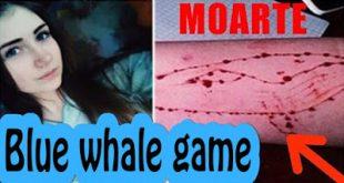 «Μπλε Φάλαινα»: Προσοχή από την ΕΛ.ΑΣ. για επικίνδυνο διαδικτυακό παιχνίδι