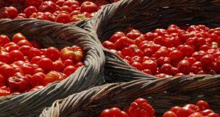 Τέσσερα πράγματα που πρέπει να ξέρετε για την ντομάτα