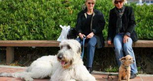 Σκύλος…ο καλύτερος προπονητής του ανθρώπου