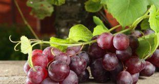 Τα θρεπτικά συστατικά που προσφέρει το σταφύλι