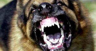 Τι είναι η Λύσσα. Τι πρέπει να κάνετε μετά από δάγκωμα ζώου; Παγκόσμια Ημέρα κατά της Λύσσας