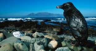 Τι ζημιά προκαλεί το πετρέλαιο στην θάλασσα; Πώς γίνεται η απορρύπανση και πόσο επικίνδυνη είναι για το περιβάλλον;