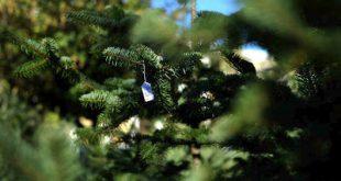 Στολίστε με χριστουγεννιάτικα φυτά