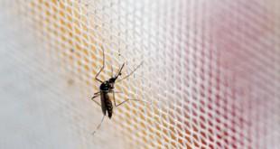 Η έξαρση του ιού Ζίκα: το κυνήγι της Sanofi για το εμβόλιο και η χαρτογράφηση της εξάπλωσης από την Google