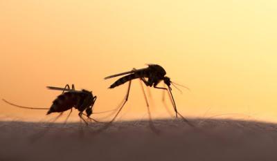 Πόσο σοβαρό είναι να ζούμε ή να έχουμε επισκεφτεί κάποια περιοχή που έχει μπει σε καραντίνα, λόγω ελονοσίας;
