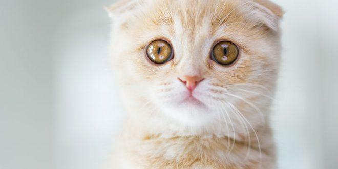 Αλλεργία στη γάτα: Τρόποι να περιορίσετε τις ενοχλήσεις