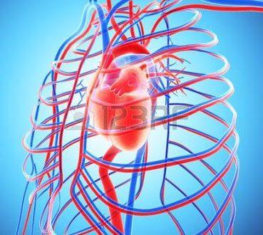 Μεταμόσχευσαν σε πειραματόζωα αιμοφόρα αγγεία βγαλμένα από τρισδιάστατο εκτυπωτή