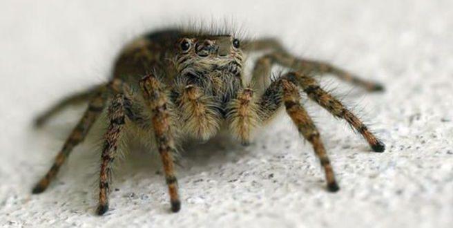 Πώς μπορεί το δηλητήριο της αράχνης να βοηθήσει μετά από εγκεφαλικό