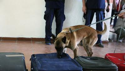 Σκύλοι «ντετέκτιβ» στους δρόμους της Θεσσαλονίκης