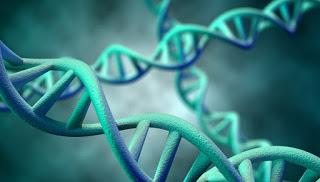 Ανακαλύφθηκαν εκατοντάδες γονίδια που φέρνουν πρόωρη εφηβεία στα κορίτσια