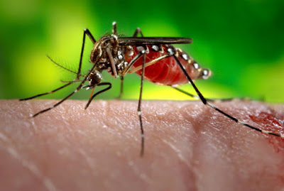 Λίγα λόγια για τις σκνίπες και τα κουνούπια και πώς αντιμετωπίζεται, το τσίμπημα τους, φαρμακευτικά ή με φυσικό τρόπο