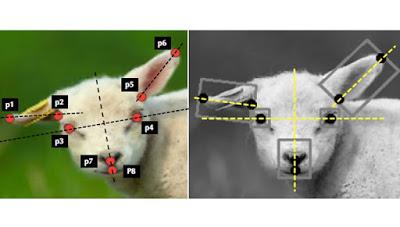 Σύστημα τεχνητής νοημοσύνης κάνει διάγνωση του πόνου σε ζώα