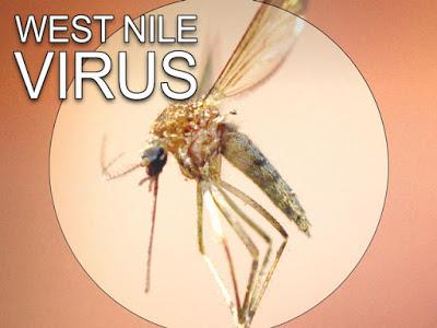 Κανένα περιστατικό ιού του δυτικού Νείλου στη Βόρεια Ελλάδα μέχρι στιγμής