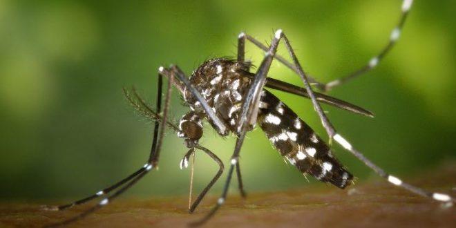 Πώς θα προστατευτείτε από τα κουνούπια και τον ιό του Δυτικού Νείλου