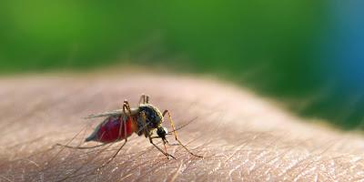 Σε καραντίνα χωριά της Θήβας υπό τον κίνδυνο ελονοσίας!