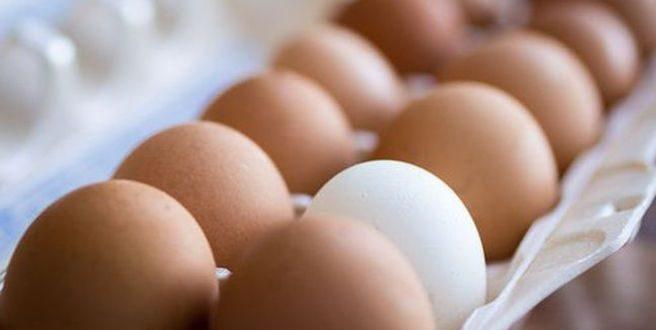 Τι ρόλο παίζει το χρώμα και το μέγεθος ενός αυγού