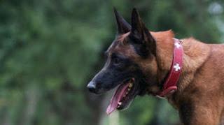Οι σκύλοι είναι πιθανότερο να δαγκώσουν τους αγχώδεις και νευρωτικούς ανθρώπους