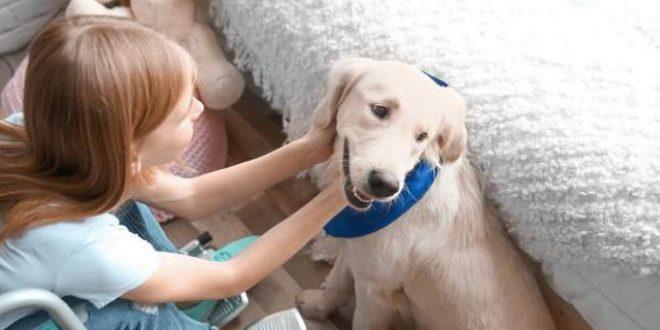 Πώς οι σκύλοι-βοηθοί αλλάζουν ζωές παιδιών με αναπηρίες
