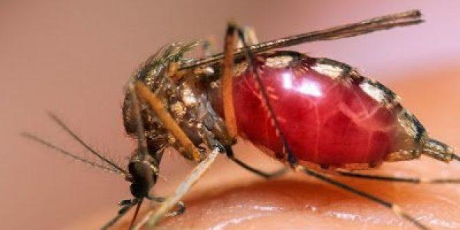 Γιατί προκαλεί φαγούρα το τσίμπημα των κουνουπιών; Πώς να αντιμετωπίσετε την φαγούρα; Εντομοαπωθητικά με βότανα