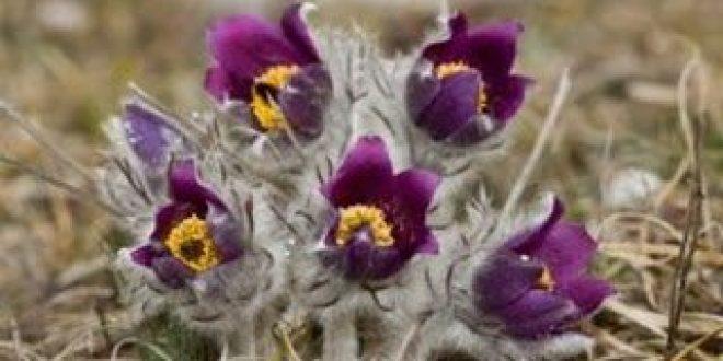 Σημαντική για τους επιστήμονες η αναγραφή του τόπου και της ημερομηνίας συλλογής στα φαρμακευτικά φυτά