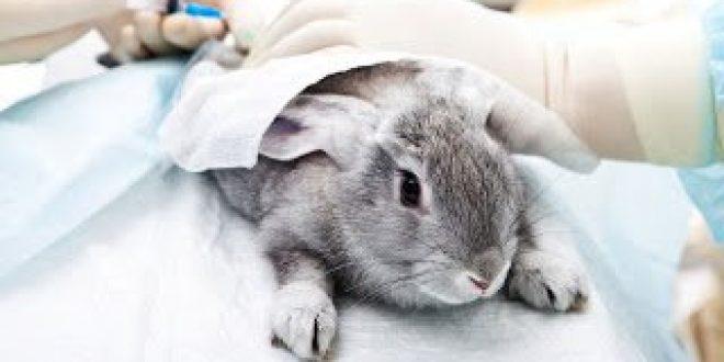 Το ΕΚ ζητάει την παγκόσμια απαγόρευση δοκιμών καλλυντικών σε ζώα