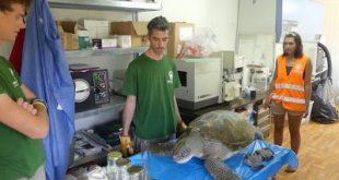 Έξαρση Θανάτων Θαλάσσιων Χελωνών στο Αιγαίο