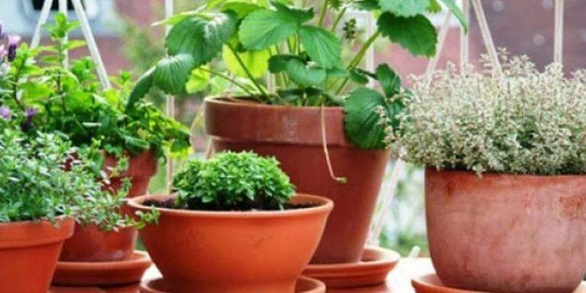 Τρία φυτά που απωθούν τα κουνούπια