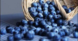 Μύρτιλα (Vaccinium myrtillus) και άγρια μύρτιλα (bilberries) super foods για μεταβολικό σύνδρομο, παχυσαρκία, διαβήτη, καρδιά, καρκίνο, μάτια, αντιγήρανση