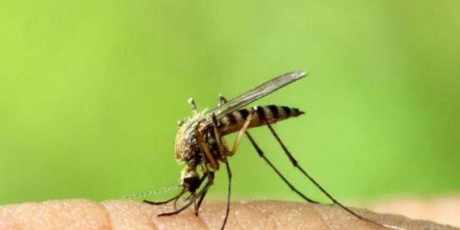Αποτελεσματικοί τρόποι να σταματήσετε την φαγούρα από τα κουνούπια