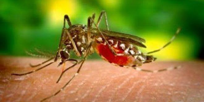 Μόνο ο υπουργός Υγείας δεν ανησυχεί για τον ιό των κουνουπιών