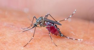 Τα κουνούπια προτιμούν τους ανθρώπους με χοληστερίνη, ουρικό οξύ, ιδρώτα, τις εγκύους